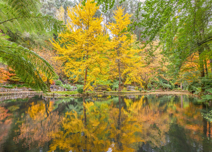 Dandenong Ranges attractions autumn